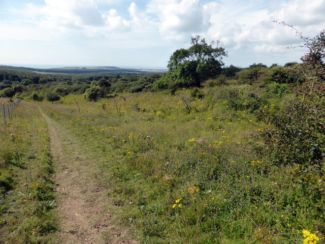 Path in Lullington Heath National Nature Reserve