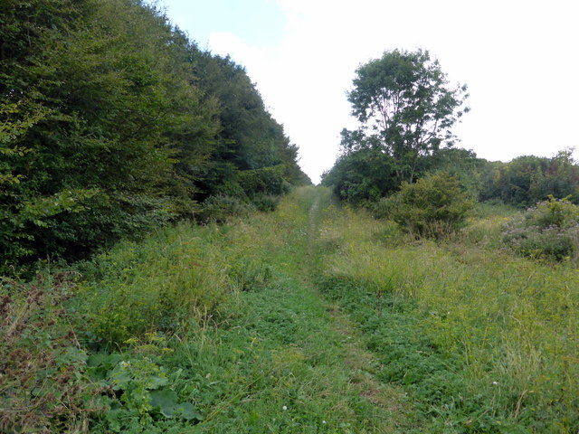 Footpath through Lullington Heath National Nature Reserve