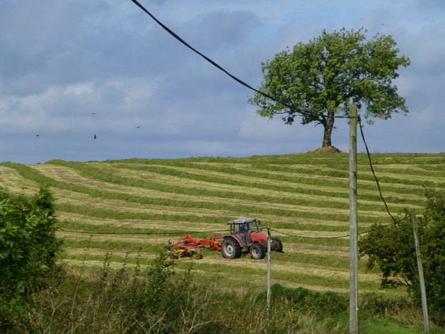 Cutting grass, Aghafad