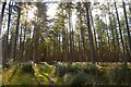 NJ7303 : Forest Track on Hill of Fare, Aberdeenshire by Andrew Tryon