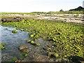 NR7062 : Seaweed, Port na Gaillinn by Jonathan Wilkins