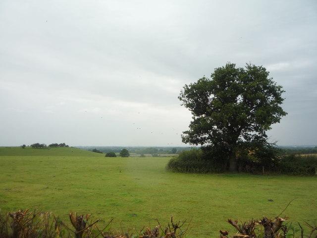Grazing north of Fauld Lane