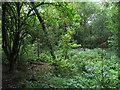 SE3029 : Overgrown stream in Middleton Park by Stephen Craven