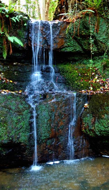 waterfall in waterfall wood