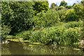 TQ1750 : River Mole by Ian Capper