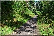 SK1984 : Path to Ladybower Reservoir by David Martin