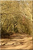 SP5606 : A bridleway in Shotover Country Park by Steve Daniels