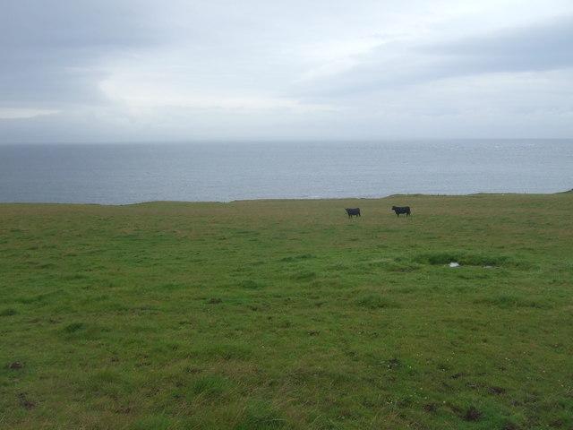 Coastal grazing near Fasberry