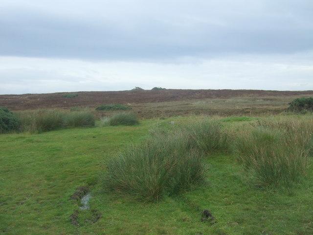 Rough grazing near St Johns
