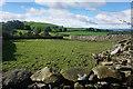 SD3977 : Field with rabbits near High Fell Gate by Bill Boaden