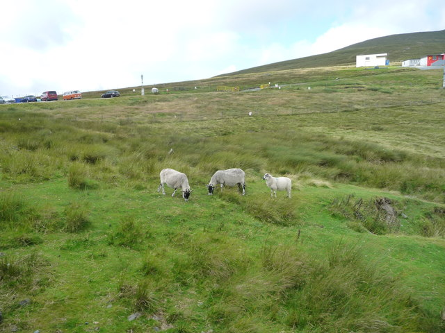 Moorland sheep, Bungalow, Snaefell