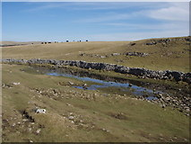 SD8965 : Malham Beck upstream from sink hole by Johnny Coop