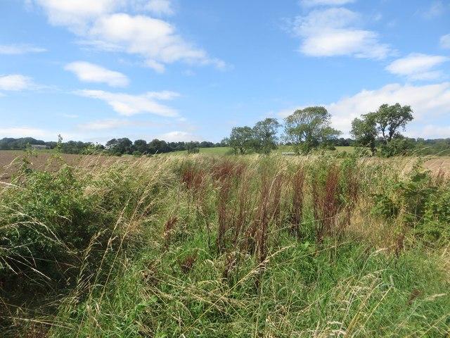 Bridleway between fields