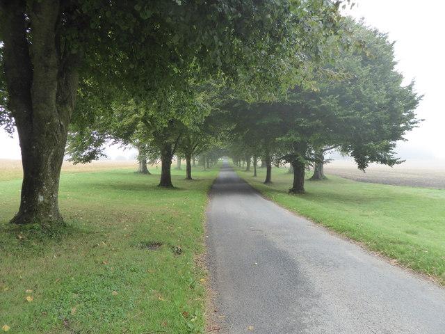 Tree-lined road, Up Cerne