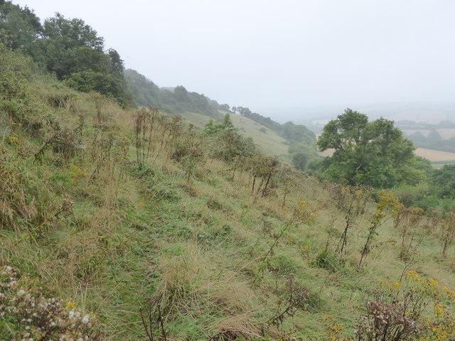 Hillside above Minterne Parva