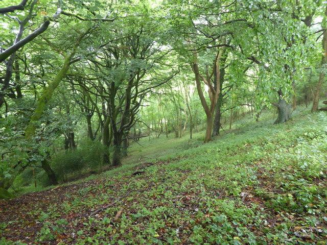 Woodland above Minterne Parva