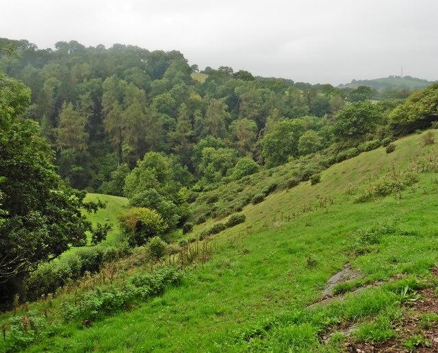 Dipford Wood