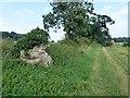 TF6709 : On Mill Drove near Shouldham, Norfolk by Richard Humphrey
