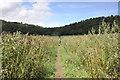 SJ5358 : The Sandstone Trail approaching Beeston Castle by Jeff Buck