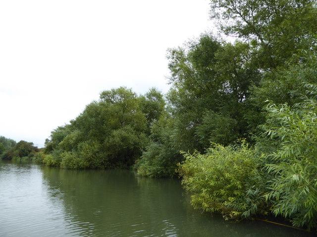 Willows beside the River Thames near Appleton