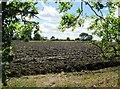 SE8131 : Recently  ploughed  field  near  Beech  Farm by Martin Dawes
