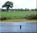 NT8438 : Fly fishing on the River Tweed by JThomas