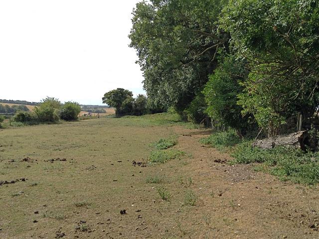 Horse grazing at Sutton Court Farm