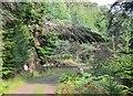 NH4722 : Fallen tree, Ruskich Wood by Jim Barton