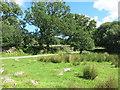 SX6862 : Marshy patch at Shipley Bridge by Des Blenkinsopp