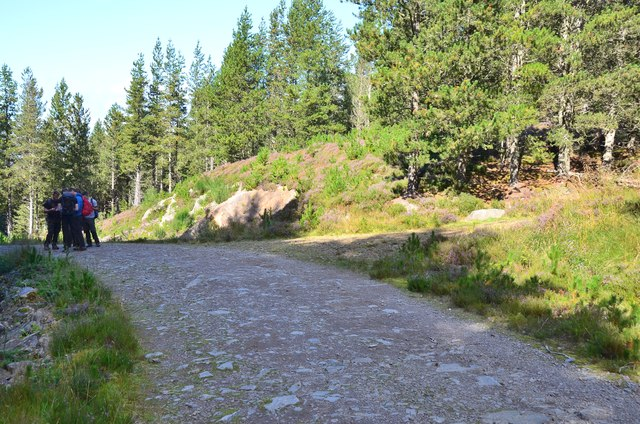 Track in Abriachan Forest