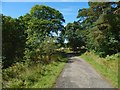 NS4276 : Avenue from Overtoun House by Lairich Rig