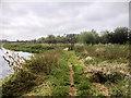 SP8965 : Nene Way near Wellingborough by David Dixon