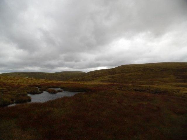 More bog...