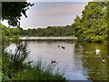 SK4564 : The Miller's Pond, Hardwick Park by David Dixon