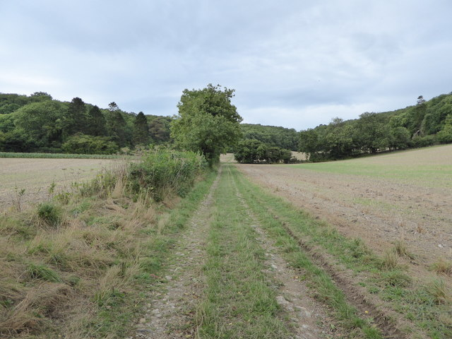 Bridleway through farmland up to Up Cerne Wood