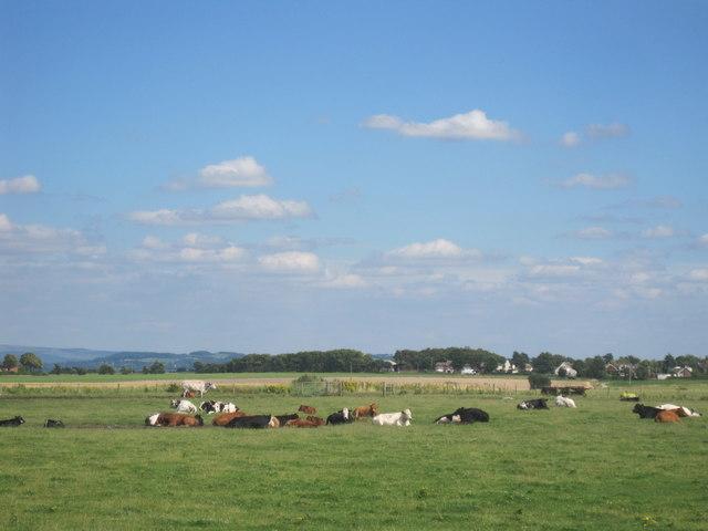 Farmland with cows
