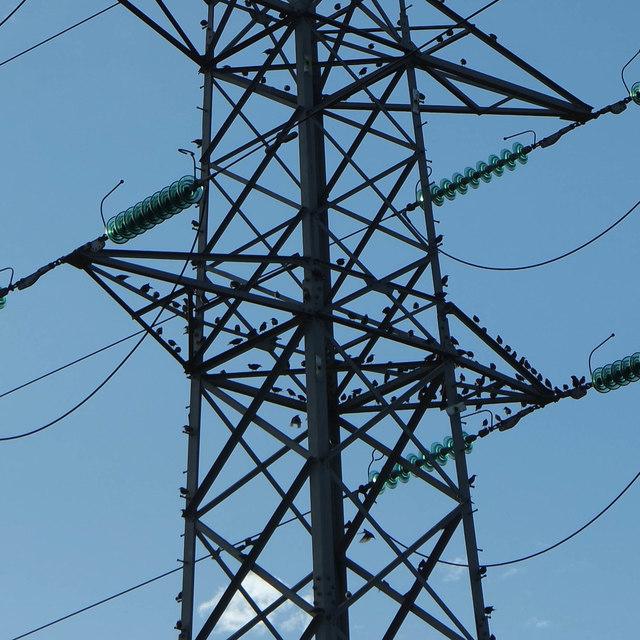 Birds among the pylons, Penketh