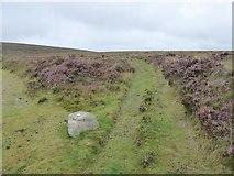 SX6781 : Tracks and heather on Dartmoor by David Smith