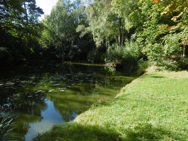 Pond at Kilndown