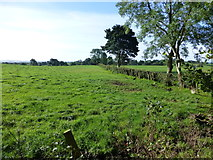 H5472 : Bracky Townland by Kenneth  Allen