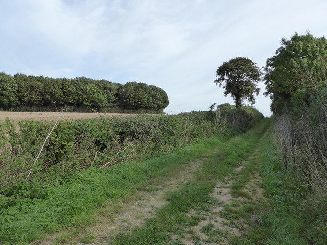 Bridleway east of Muston Copse