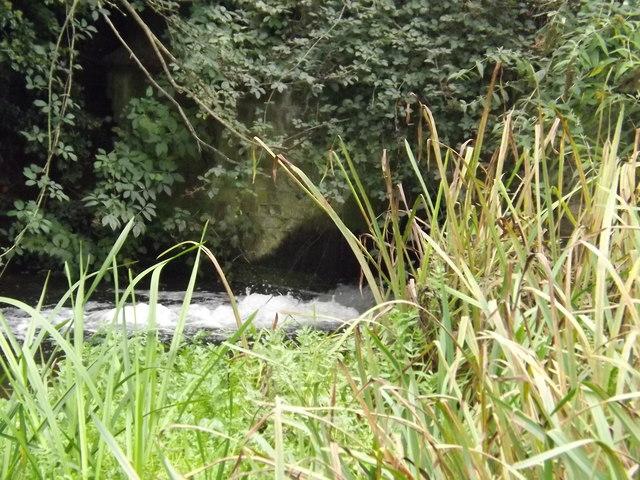 Millpond at Pakenham Water Mill