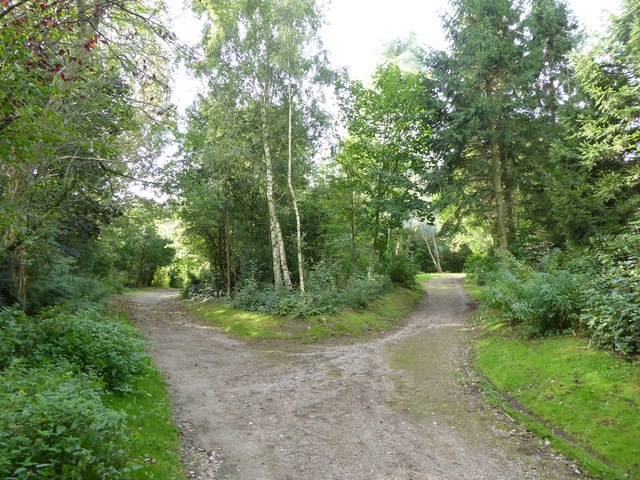 Festival Park: path junction in the woods