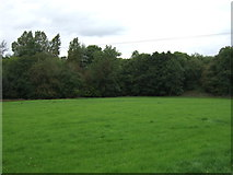 SD7543 : Grazing off Chatburn Road (A671) by JThomas
