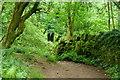 SO3217 : Path through verdant woodland by Jonathan Billinger