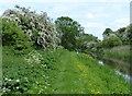 SK7191 : Cuckoo Way and the Chesterfield Canal by Mat Fascione