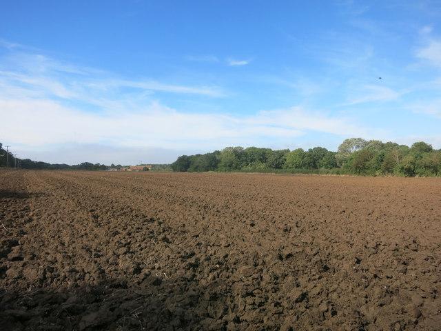 Field at Joshua Farm