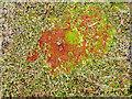 HU3730 : Underfoot on Houss Ness by Julian Paren
