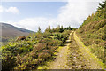R8368 : Knockanroe Wood Loop hiking trail by David P Howard