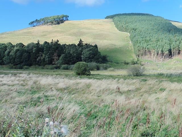 Hillside above Linton Loch